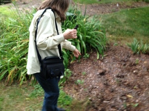Linda Godfrey at site of apparent deer and predator trails