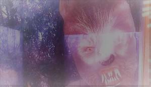 windowwolfsoft